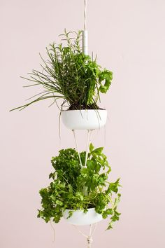 No matter how much space you have you can still enjoy growing your own herbs to enjoy anywhere in your home with this easy DIY hanging herb garden.