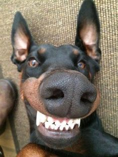 38 Funny Dogs and Puppies Pictures | Funny Dog | DomPict.com
