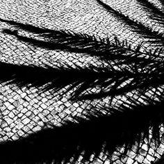 sbsw16 > photo > black and white on dibond > palm three
