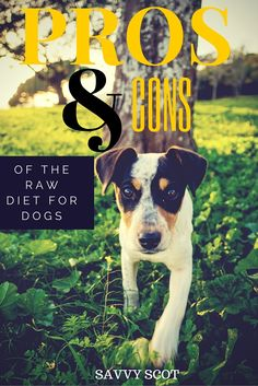 Pros and cons of the raw diet for dogs