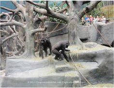 Tropic World at Brookfield Zoo.