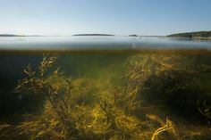 October 25, 2015. Big changes are occurring in one of the fastest-warming spots on Earth  At: http://www.pressherald.com/2015/10/25/climate-change-imperils-gulf-maine-people-plants-species-rely/