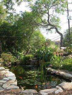 Japanese koi pond at B & K's house by ntackett, via Flickr