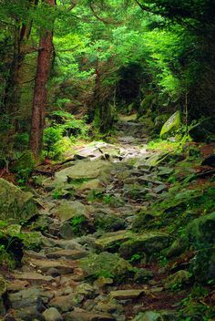 Great Smoky Mountains National Park hiking trail in North Carolina. Best hikes in the Smokies: http://www.romanticasheville.com/smoky_hiking.htm