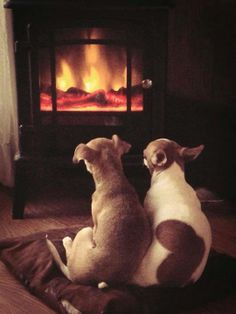 They definitely are heat seekers... Chihuahua