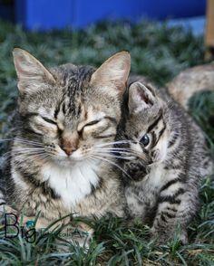 📷: 🐱 Babaloo & Pipoca, the kitten - Sao Paulo, Oct. 2011 ©BigDigitalArt#bigdigitalart#graphicdesign#graphicdesigner#designgrafico#disenografico#digitalart#cores#colors#photoart#photodesign#instagram#petphotography#photography#catlovers#petlovers#kitten#instacat#pets#miau#meow#cats#enjoythelittlethings#meditation#catnap#takeanap#mindfulness#liveinthemoment#tinybeautifulthings#love#motherhood