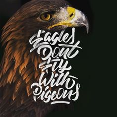 Eagles don't fly with pigeons!