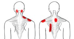 A stiff neck and tight shoulders are very well known issues for many of us. The good thing is that if this pain is caused by stress, bad sitting habits, or lack o… Neck And Shoulder Exercises, Back Pain Exercises, Shoulder Workout, Hip Stretching Exercises, Upper Back Stretches, Neck Stretches, Fitness Exercises, Tight Neck, Tight Shoulders