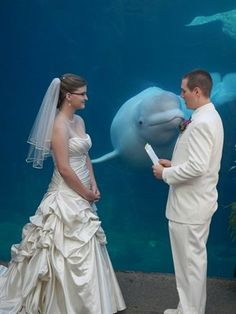 aquarioum-wedding-image