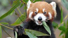 20 Best Panda Wallpaper For Your Desktop