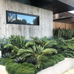 Tropical garden design – Site visit today to project completed a few years back These Cardboard Palms and Agave poking out of the Korean Clumping Grass is insane 👌🏻 cityscaper ard bettergardenbiggerlife Architec - Gardening Home Landscaping, Tropical Landscaping, Front Yard Landscaping, Palm Garden, Tropical Garden Design, Dream Garden, Tropical Gardens, Garden Grass, Coastal Gardens