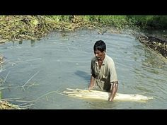 """See how jute is harvested. While this video is from India, it can be watched after reading about Bangladesh in the Sonlight Core C book """"Window on the World"""", which states that jute is a major export of that country."""