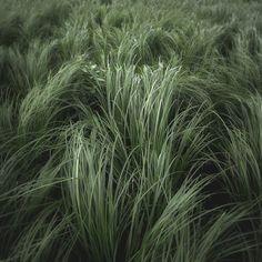 Gras by Jürgen Heckel, via Behance