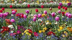 All wallpaper images) pictures Free Hd Wallpapers, Spring Flowers, Botanical Gardens, Tulips, United Kingdom, Plants, Pictures, Swansea, Van