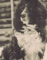 Tsarevich Alexei's Springer Spaniel was named Joy, which Alexei had received during the early part of the War. Joy was the only living being known to havesurvivedthat night in Yekaterinburg. She was found wandering lost and forlorn around the yard of the house, crying for her master.Joy hid during the murder and when the bodies were taken out of the cellar room, he ran out into the streets of Ekaterinburg. Later, Joy was found in the home of an Ipatiev House guard, Michael Letemin.