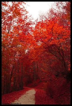"""Nymfeo in Florina. One of the most beautiful places in Greece """"dressed"""" in blood red. The Places Youll Go, Places To See, Places In Greece, Greece Travel, Countries Of The World, Greek Islands, Dream Vacations, Countryside, Beautiful Places"""