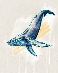 Humming Bird Discover humpback whale humpback whale on Behance Art Aquarelle, Watercolor Paintings, Watercolour, Humpback Whale Tattoo, Whale Illustration, Whale Tattoos, Underwater Art, Whale Art, Blue Whale Drawing