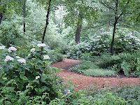 Oakleaf Hydrangea: love the pathway between the tall trees.  I can totally do this in my back yard.