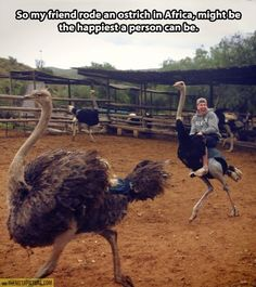 I'm pretty sure that would be my face if I ever got to ride an ostrich