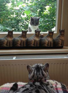 #cat #catstandoff ihavecat.com/2013/12/04/cat-woman-wednesday-a-far-cry-from-crazy/