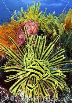 Fish coral and crinoids