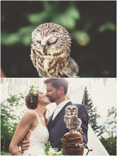 This Wedding Had a Real Owl as the Ring Bearer Ring bearer Owl