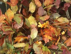 We have autumn leaves available for hire if you don't want to use the real thing!