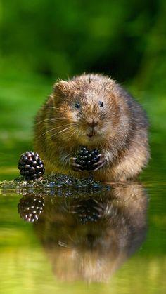 animal, blackberry, reflection, green