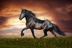 1990 horoscopo chino caballo - Google'da Ara