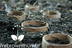 cut the paper tube into sections about an inch tall and sunk them into the soil, I then placed a couple of seeds inside of each of the secti...