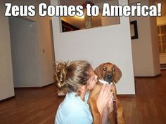 Zeus The Ridgeback Comes to America in 2014   ~~~   https://plus.google.com/ Zeustheridgeback/posts