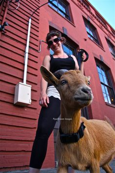 Joss, Co-Owner of Portland's famous Belmont Goats, walks this little one on a leash-- for the goat's safety.  Keeping Portland weird- and wonderful.