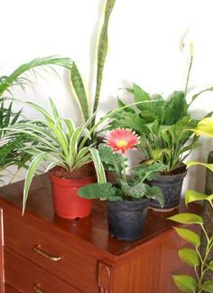 Air Purifying Plants Get The Whole Collection Of Best 6 Indoor Natural
