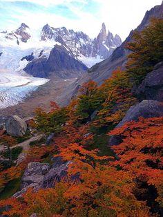 Otoño en la Patagonia. Lengas teñidas de color rojizo.Arboles que crecen en la parte mas alta de las montañas.