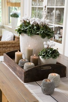 Looking for positioning ideas for a window sill or a table-scape. We love the combination of plants and candles.