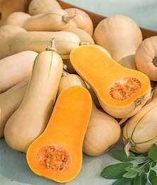 Winter Squash Guide   Co+op, welcome to the table Fall Vegetables To Plant, Types Of Vegetables, Veggies, Organic Gardening, Gardening Tips, Burpee Seeds, Fenced Vegetable Garden, Sweet Dumplings, Squash Varieties