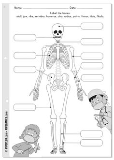 Label me printable - Bones, skeleton Pipo by @evapipo Level Easy KS2, #bones #skeleton #labelme #worksheet #coloring #Pipo