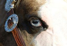 Quarter Horse stallion Big Chex To Cash