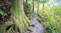 Mont Takao : randonnée à Tokyo