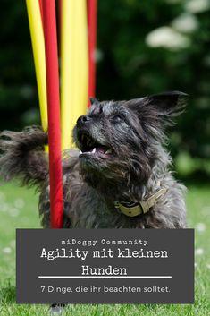 || #Hund || Ideen || #Hunde || Tipps || Tricks || Ideen || Liebe || Welpen || Bilder || #Agility