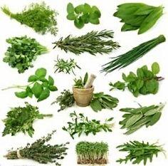 Grow Your Own Medicinal Herbs