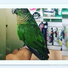 30 Me gusta, 5 comentarios - Deslys Pet Grooming (@deslyspg) en Instagram: