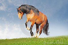 festa del cavallo 2015 Asso - Cerca con Google