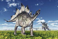 How to sex a stegosaurus - Science News - redOrbit