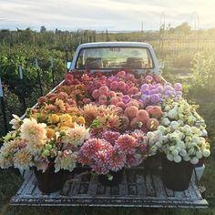 I Hope you feel Beautiful today!  @floretflower