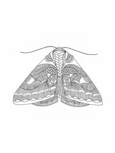 Millie Marotta — Moth series