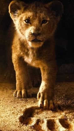 King 2019 Simba Wallpaper for Mobile and iPhone - . , Lion King 2019 Simba Wallpaper for Mobile and iPhone - . , Lion King 2019 Simba Wallpaper for Mobile and iPhone - . Art Roi Lion, Lion King Art, Lion King Movie, Lion Art, Disney Lion King, Lion King Simba, Tier Wallpaper, Animal Wallpaper, Cartoon Wallpaper