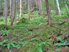 Chilliwack River Provincial Park, BC