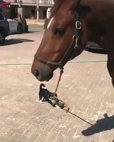 Horses are a symbol of boundless physical strength and unrestrained freedom; the… - Welpen Funny Animal Memes, Funny Animal Videos, Cute Funny Animals, Funny Animal Pictures, Cute Baby Animals, Funny Dogs, Animals And Pets, Dog Memes, Funny Memes