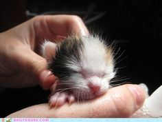 Reader Squees: Itty Bitty Kittens First Bath...